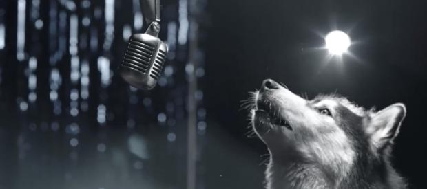 Perros que cantan